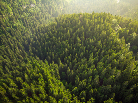 Sunrise over forest in Julian Alps,Slovenia,drone view.