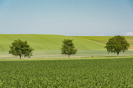 Trees in farming rolling hills in Czech Moravia region. Фото со стока