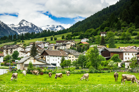 Cow pasture and Alps in background of Mustair village,Switzerland.