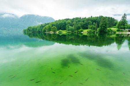 Beautiful and clear water with fish at Bohinj lake,Slovenia. Stock Photo