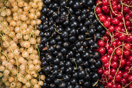 White currant, redcurrant and blackcurrant, food background.