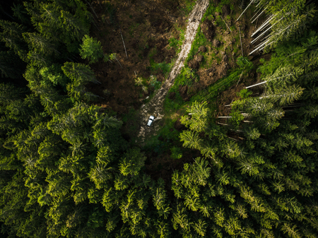 Off road car in the middle of forest, aerial top down view.