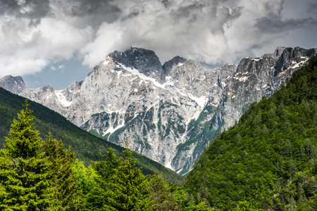 High mountains peak with snow and dense forest in foreground