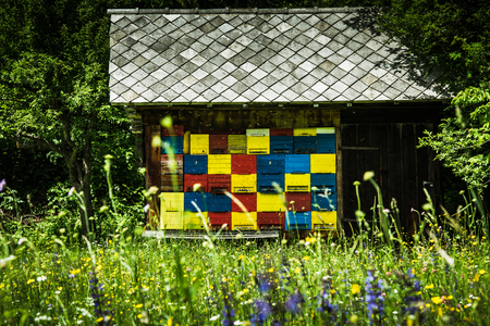 Colorful traditional bee hives in rural countryside of Slovenia