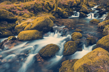 Fast flowing stream in ancient forest, toned and colored effect