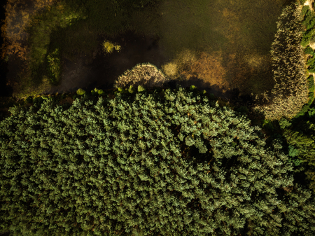 Top down aerial drone view over forest and lake