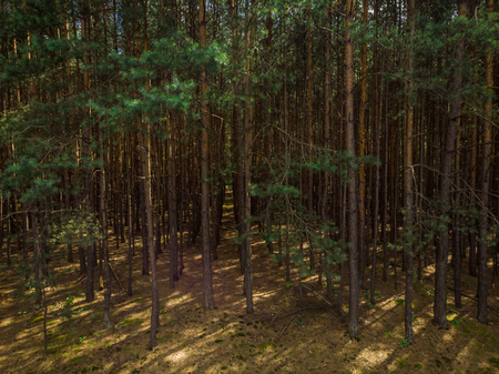 Elevated view trough dense pine forest Stock Photo - 106335838