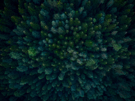 Top down aerial view over dense forest trees Stock Photo