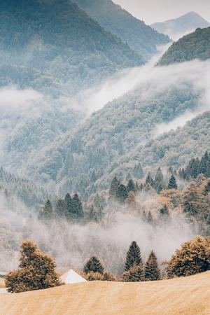 Nadelbäume im Wald oder Wald im Herbst. Herbstfarben, Saisonwechsel und Wetterkonzept.