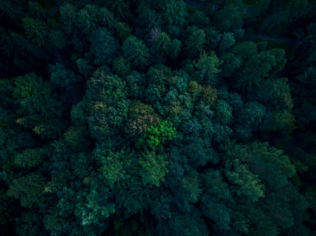 Beautiful trees in woodland, top down aerial drone view