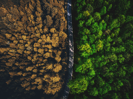 Half autumn half summer forest top down view