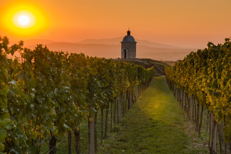 Vineyards in Moravia at sunset. Lonely chapel in background. Imagens