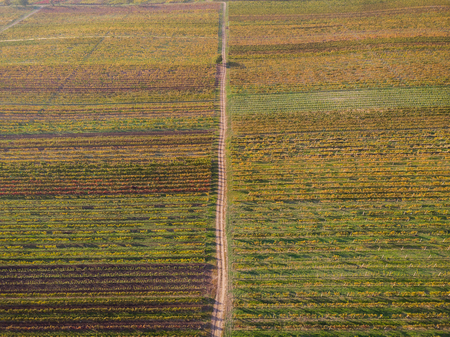 Countryside rural road in autumn vineyards, aerial drone from above.