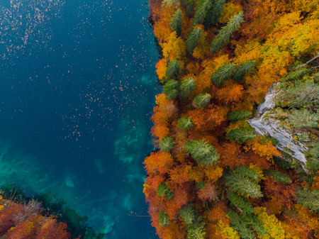 Magical autumn forest, top down aerial from above.