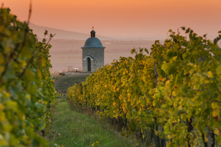 Romantic vineyards in Moravia in autumn colors at sunset..