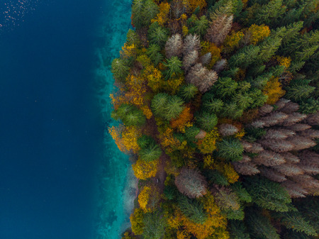 Colorful forest by lake side, aerial from above.