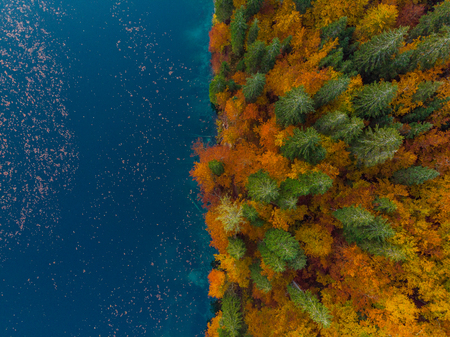 Blue water lake edge and autumn forest, top down from above. Stock Photo