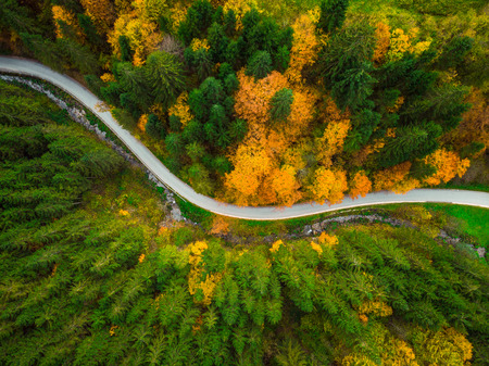 Autumnal foliage  in woodland and winding road, drone aerial view. Stock Photo