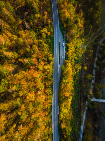 Asphalt road trough forest in fall, top down aerial from above. Фото со стока