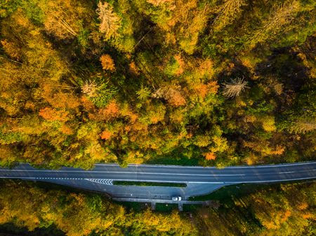 Asphalt road trough forest in fall, top down aerial from above. Stock Photo