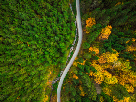 Colorful forest and curvy road, aerial drone view from above. Фото со стока