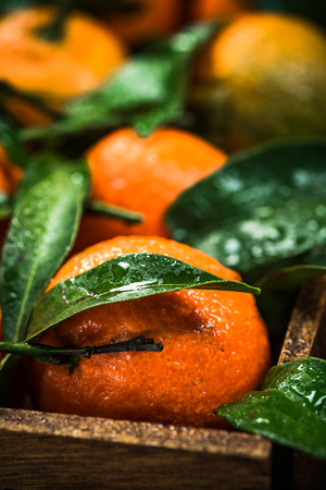 Tangerines or clementines, close up view. Stock Photo