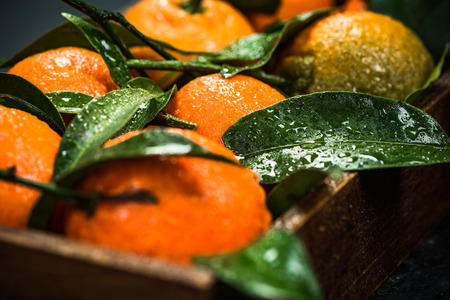 Fresh tangerines or clementines, whole with leaves.