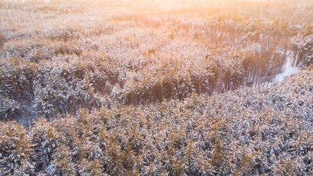 Sunset over snow covered woodland, aerial photo. Stock Photo