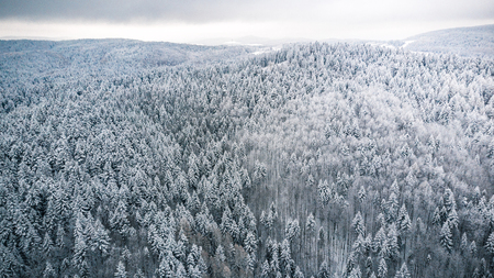 Pine tree woodland forest after snowfall, winter from above.
