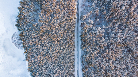 Winter woodland at sunny day from above. Aerial drone top down view. Stock Photo
