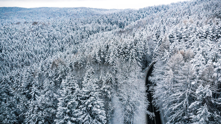 Aerial drone view over forest after snowfall.