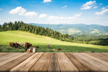 Cow pasture in rural mountains, product display or montage on wooden boards. 版權商用圖片
