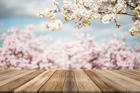 Spring blooming trees,wooden board empty table, product mock up display or montage.