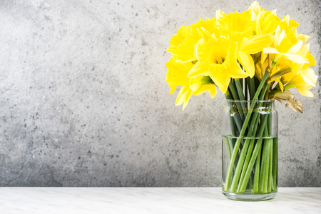 Narcisi freschi del giardino di primavera in vaso su bacground concreto.
