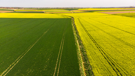 Green and yellow fields at farmland, aerial view. 스톡 콘텐츠