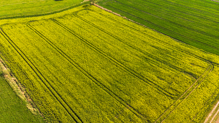 Aerial view of a land with sown green fields in countryside in spring day.