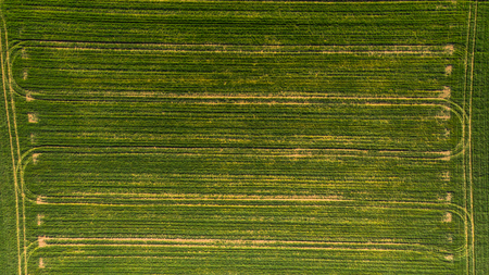 Tractor pattern on green field, aerial top down photo.