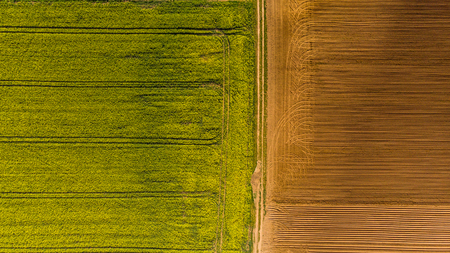 Yellow rape fields and plow soil, aerial drone view.