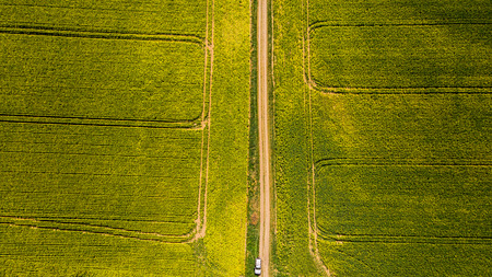 Countryside road in rape yellow fields, aerial top down photo Stock Photo