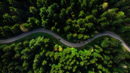 Strada tortuosa attraverso una fitta pineta. Vista aerea del drone, dall'alto verso il basso.