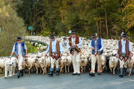 SZCZAWNICA,POLAND - OCTOBER 12, 2019: Traditional Carpathian Shepherds Leading Sheeps From Grazing in Mountains to Villages for Winter. Celebrating Traditional  Redyk Day.