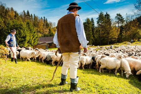 SZCZAWNICA,POLAND - OCTOBER 12, 2019: Traditional Carpathian Shepherds in Colorful Regional Clothing Guarding Sheeps Grazing in Meadow.