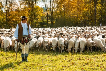 SZCZAWNICA,POLAND - OCTOBER 12, 2019: Traditional Carpathian Shepherd in Colorful Regional Clothing Guarding Sheeps Grazing in Meadow.