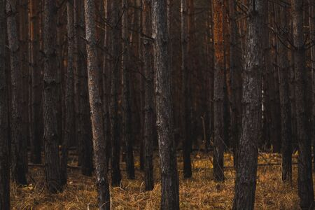 Moody Dark Forest. Desaturated Colors, Vintage Effect.