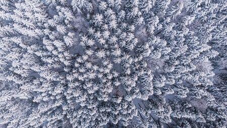 Winter Woderland Snowy Pine Trees in Wild Woodland. Aerial Top Down View.