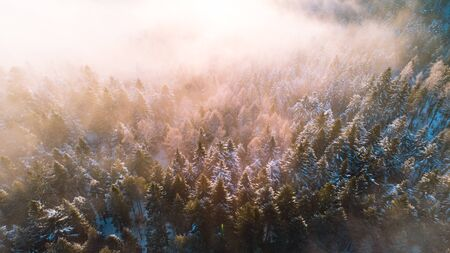 Moody Image of Winter Forest at Sunrise with Fog and Sunlight Beams. Aerial Drone View