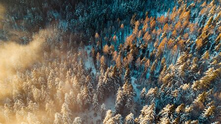 Foggy Morning at Cold Winter. Snowy Pine Trees in Woodland. Aerial View. Reklamní fotografie