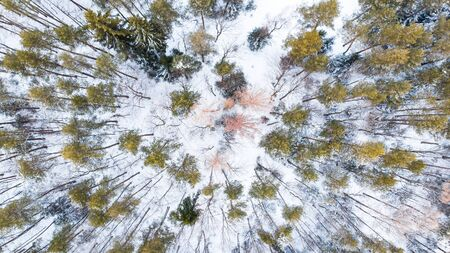 Spruce Trees in Winter Forest, Aerial Drone Top Down View. Reklamní fotografie