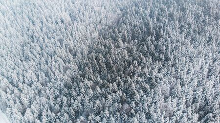 Abstract Winter Wonderland. Pine Trees Snow Covered. Aerial Drone view. Reklamní fotografie