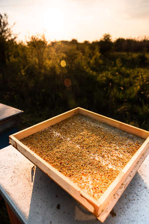 Wooden Tray with Bee Pollen. Organic Food Harvesting.